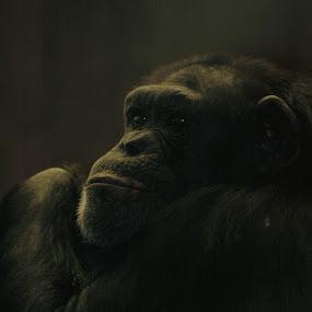 by Stephanie Ostrander Bishop - Animals Other Mammals