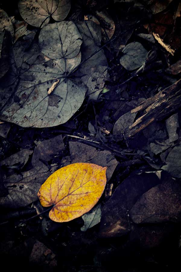 Fall Leaves from Baluran  by Tonny S - Nature Up Close Leaves & Grasses