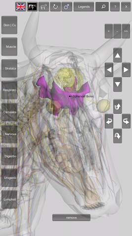 3D Bovine Anatomy Screenshot