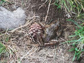 Photo: Сусрет са жабом