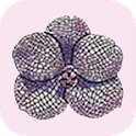 RF Orchids icon