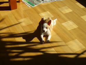 Photo: Miisa