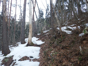 南斜面で雪は少なく