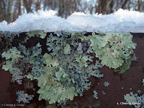 Photo: Winter signs