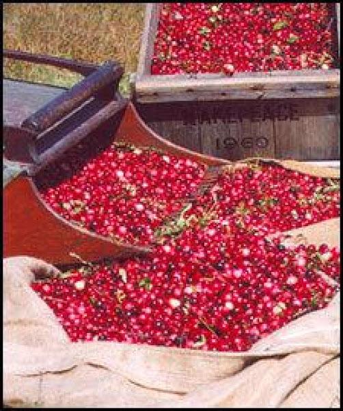 Blender Cranberry - Apple Relish Recipe