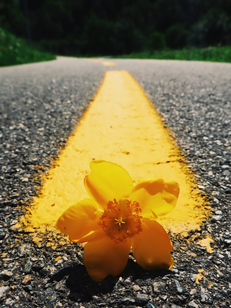 yellow way di Joye