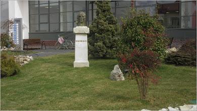 """Photo: Nandina, """"bambusul sfânt"""" (Nandina domestica), """"...un arbust cu frunze persistente, pinate, cu colorit diferit, spectaculos, in functie de anotimp. Astfel, la sosirea toamnei, frunzele verzi se coloreaza in nuante de roz pana la purpuriu. Frunzele persista si iarna..."""" - din Turda, Piata 1 Decembrie 1918, spatiu verde - 2019.03.11"""