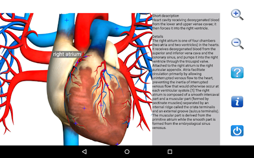 Visual anatomy free apps on google play screenshot image ccuart Gallery