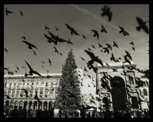 Piazza bella Piazza di Gattorosso