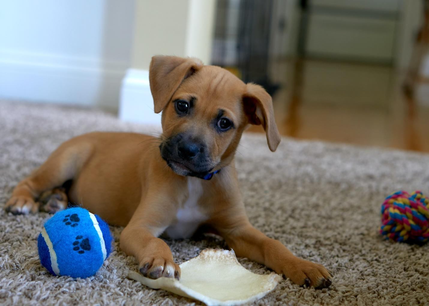 Dog Play Time