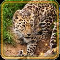 Джунгли Хищники icon