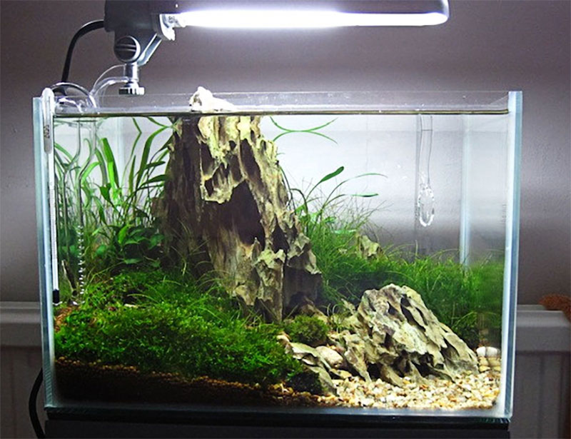 Aquascaping Styles: What You Need To Know 2