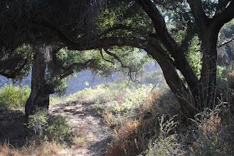 Photo: Fairy tale trees at Solstice Canyon, Malibu CA