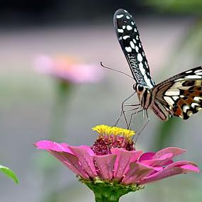 by Harry Patriantono - Nature Up Close Flowers - 2011-2013