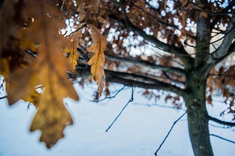 Inverno - Autunno di nogoalba