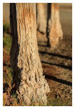 Photo: Eastern Sierras-20120715-56
