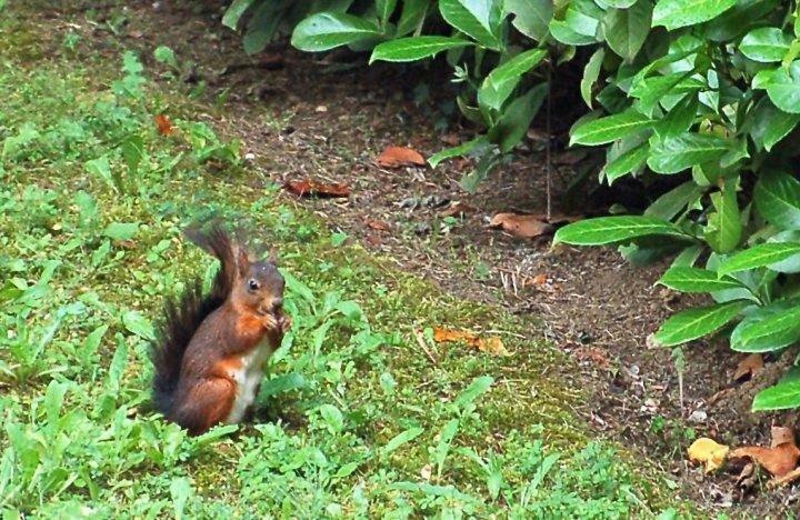 Che simpatico questo scoiattolino di fabio72