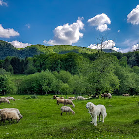 A dog and some sheep by Ionut Stoica - Instagram & Mobile Android ( clouds, mountain, green, romania, samsung, pasture, sky, galaxys6, blue, silence, summer, sheep, dog, instant, mobile )