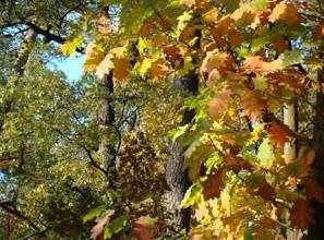 Photo: Елена Ветушенко,«Осень – рыжая подружка», глянцевая фотобумага, разм. 21 х 30 см