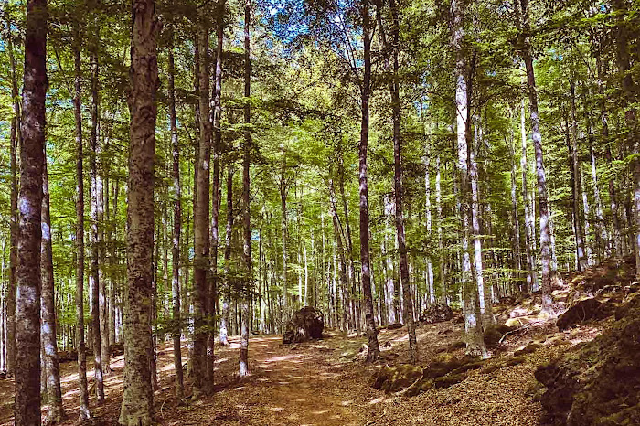 Ilsentiero del Capomacchia (Abbadia San Salvatore), Monte Amiata