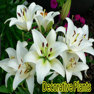 Download Free Decorative Plants For PC On Windows And Mac Apk Screenshot 1