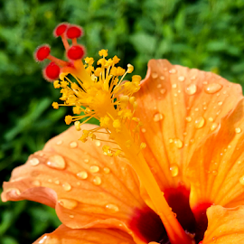 by Mahesh Gadekar - Novices Only Flowers & Plants (  )