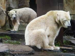 Photo: Viel Laerm um nichts, findet Knut ;-)