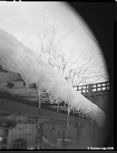 Photo: Icicles on the chicken pen.  4x5 view camera, pre-flashed paper, yellow filter, lens swing.