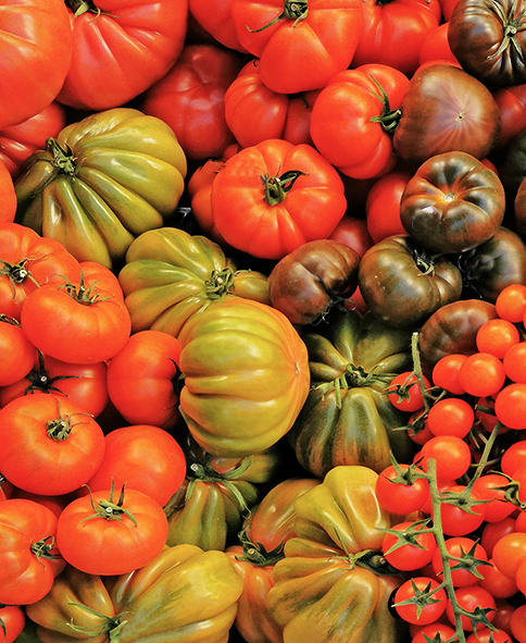 Variedades de tomate.