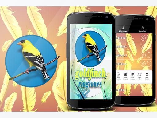 Bird Sounds Goldfinch
