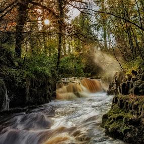 Clare Glens Falls by Noel Salisid - Landscapes Forests ( #landscapes, #falls, #waterscapes, #ireland, #forestpark )