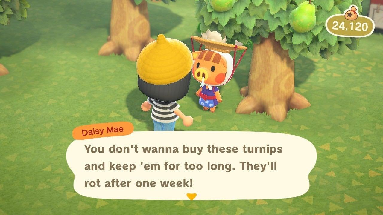 Daisy Mae - Turnip Guide - Animal Crossing: New Horizons Wiki Guide - IGN