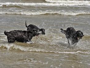 Photo: Aileen hat gewonnen und sie rennt freudig ins Meer