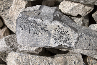 Photo: Lichen on stones piled up by the passing glacier