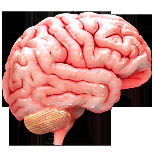 VR Human Brain