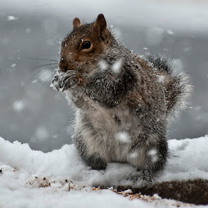 Squirrel_snow.jpg