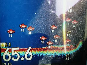 Photo: さあー! 魚群が走ったー!