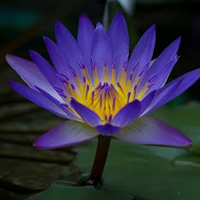 by Nengah Sukastara - Nature Up Close Flowers - 2011-2013