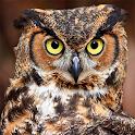 Sfondo Owl icon