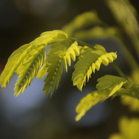 AT TERRACE by Frans Priyo - Nature Up Close Leaves & Grasses ( nature, colors, green, blur, leaf, bokeh )