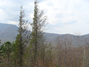 Photo: Lower Mt Cammerer Trai