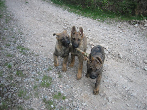 Photo: Argus, Ask og Ayla på tur