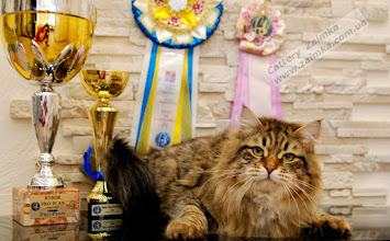 Photo: BEST in SHOW Kiev, Ukraine, March 2015