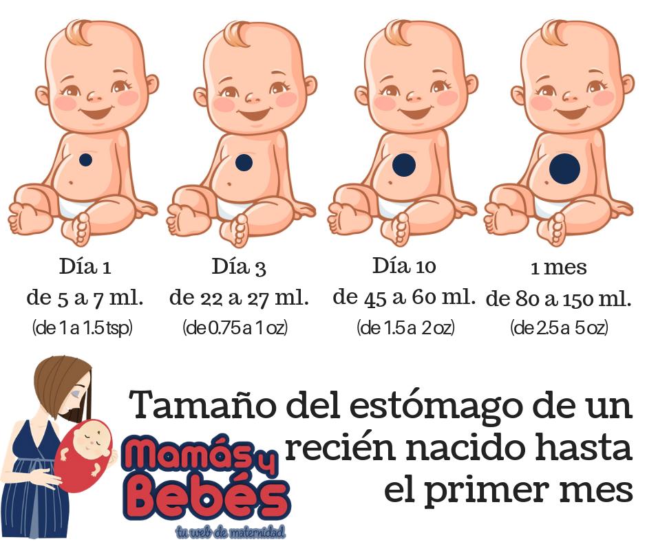 Tamaño del estómago de un recién nacido
