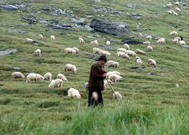 Image result for shepherd