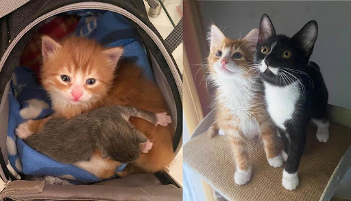 Orange Kitten Found in a Box Helps Other Cats Like Him and Finds Best Friend Along the Way