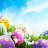 Happy Easter HD Wallpapers logo
