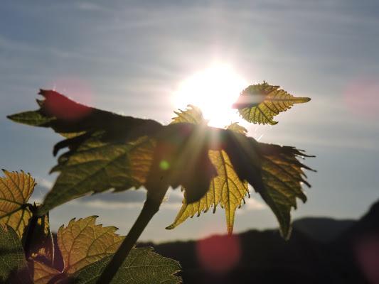 Foglie al sole di Eleonora_Mos