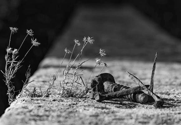 Si piantano, ma non crescono. di Tefnut_Simo