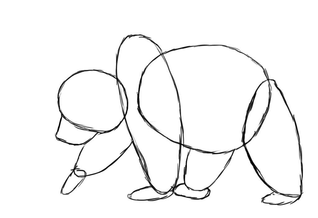 bear's back legs